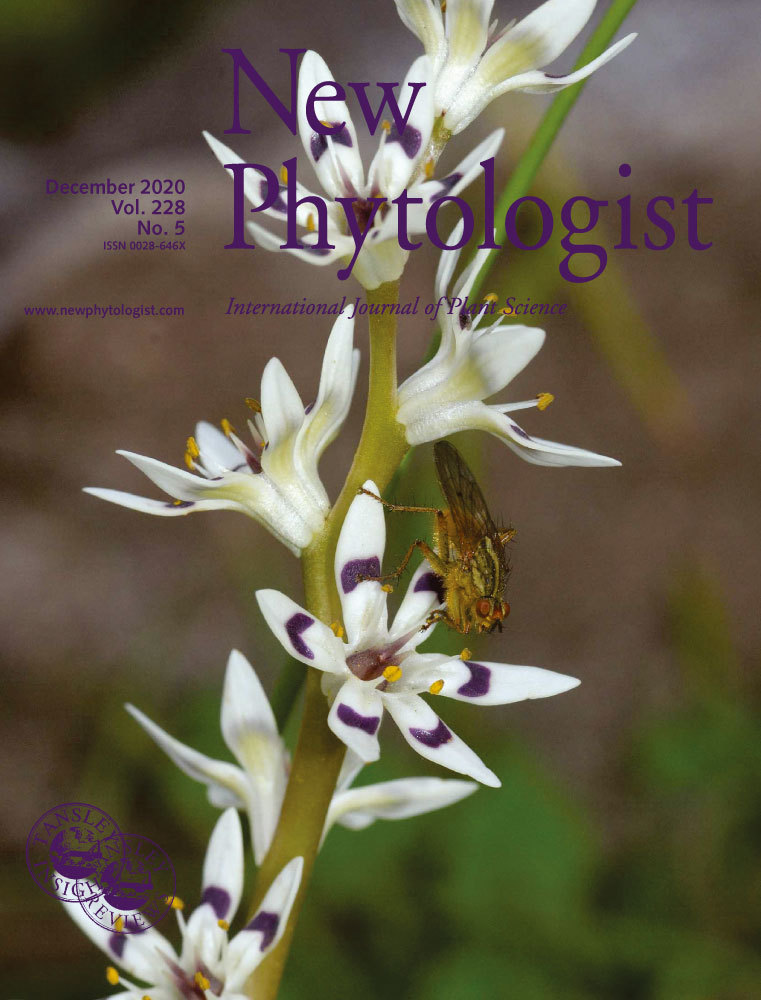 Cover_New_Phytologist